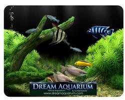 Dream aquarium screensaver - Dream aquarium virtual fishtank 1 ...